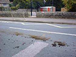 horse crap in the road
